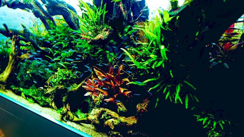 120cmの水草水槽1