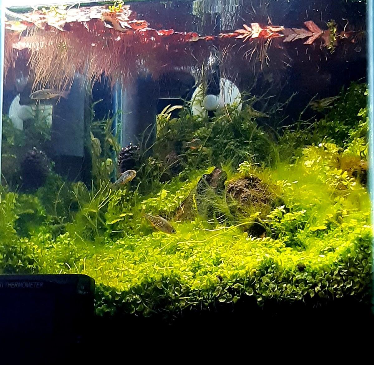 20キューブ水槽2