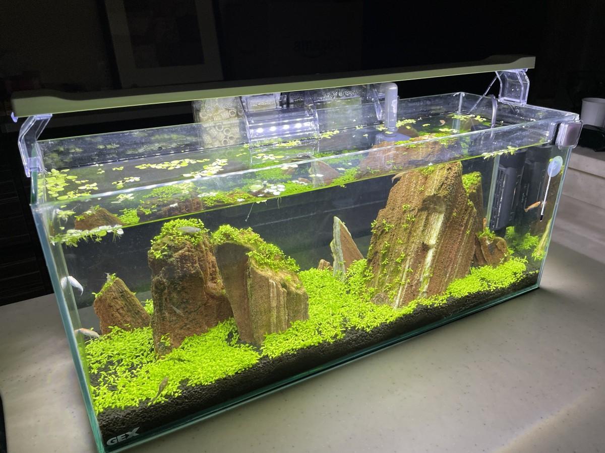 60センチスリム紅木化石水槽3