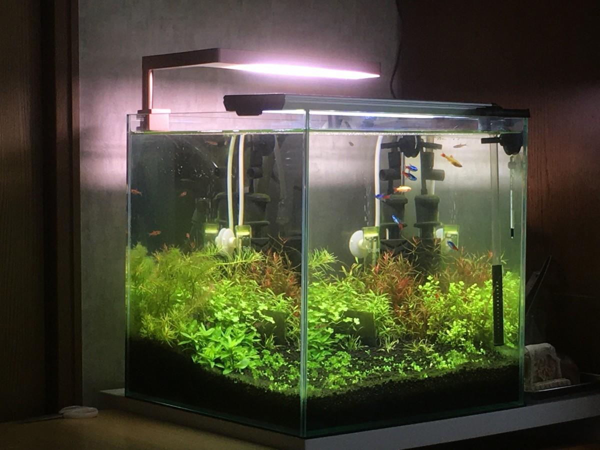キューブ 水槽 30cm