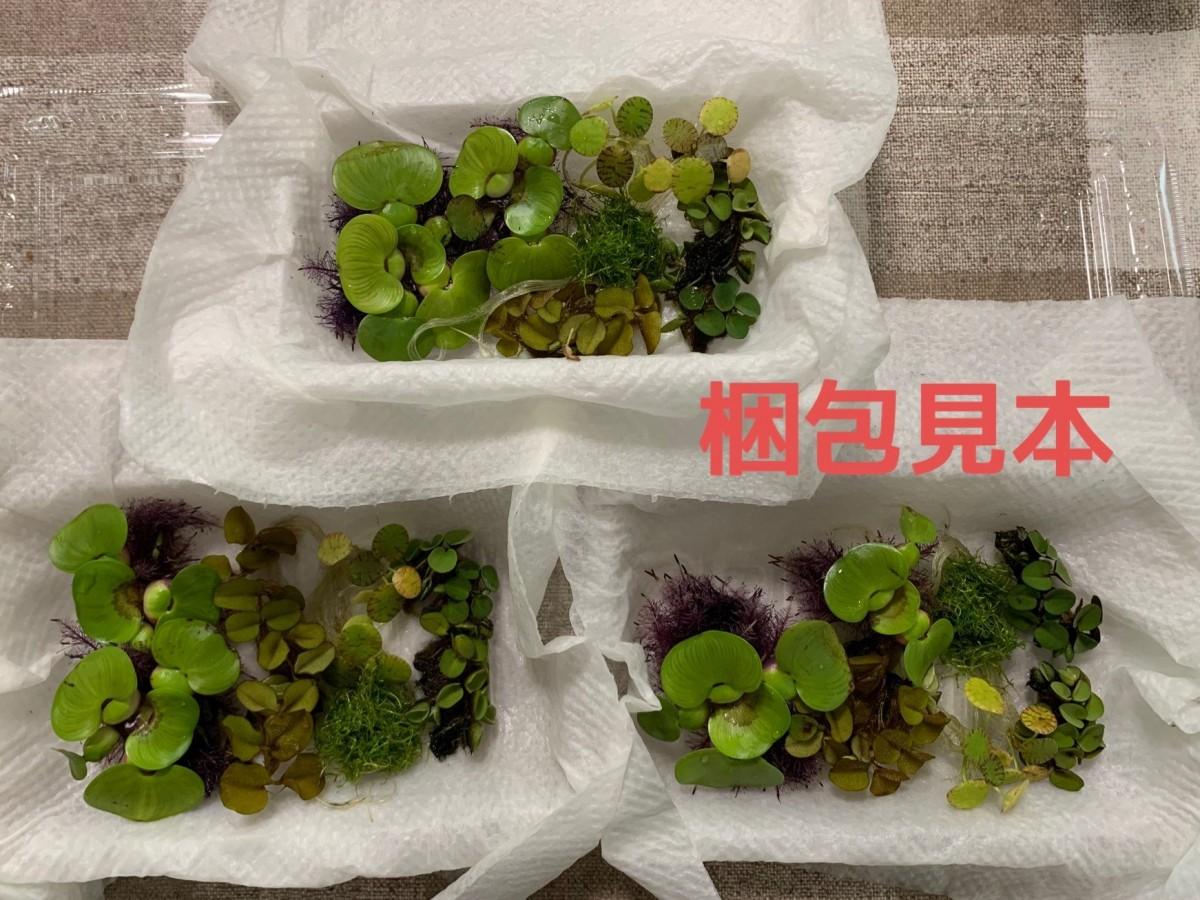 【期間限定 増量】浮草5種セット 無農薬 ホテイアオイ フロッグピット 水草 3