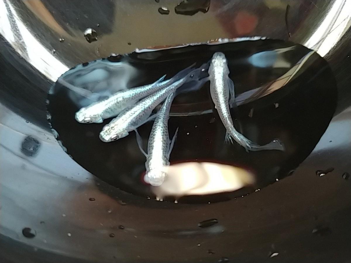 ゆらぎ  卵20個+α1